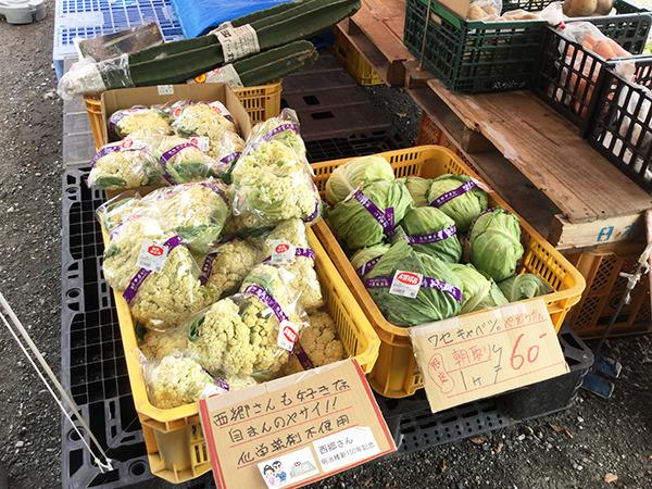 指宿大山5.jpg